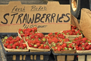 Quart-size baskets of fresh-picked strawberries for sale at a farm stand